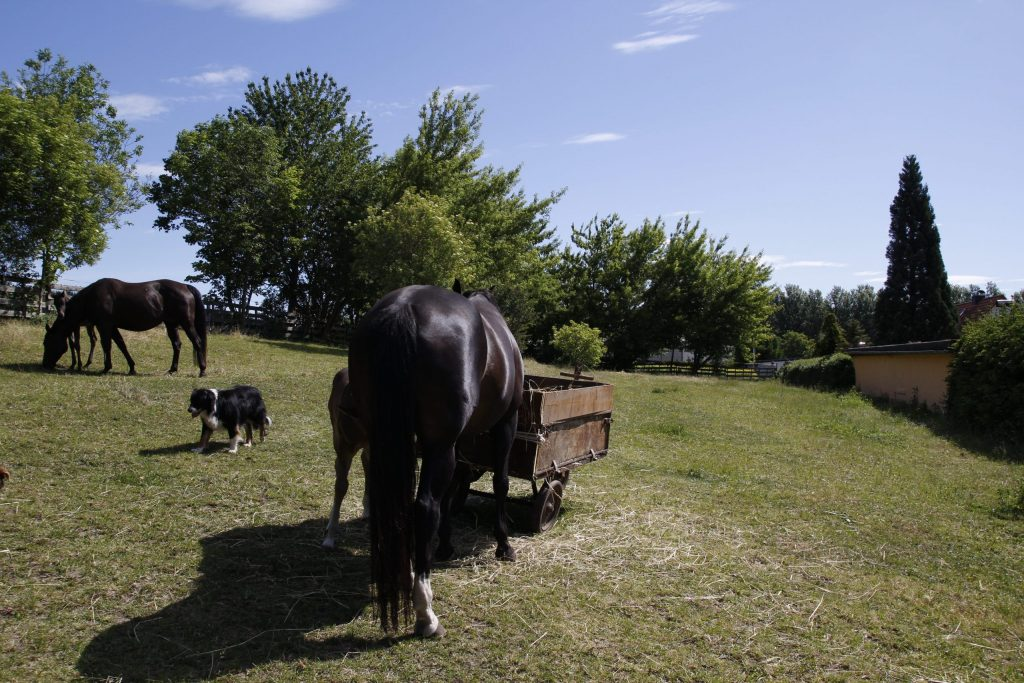 Pferdekoppel Saalekreis