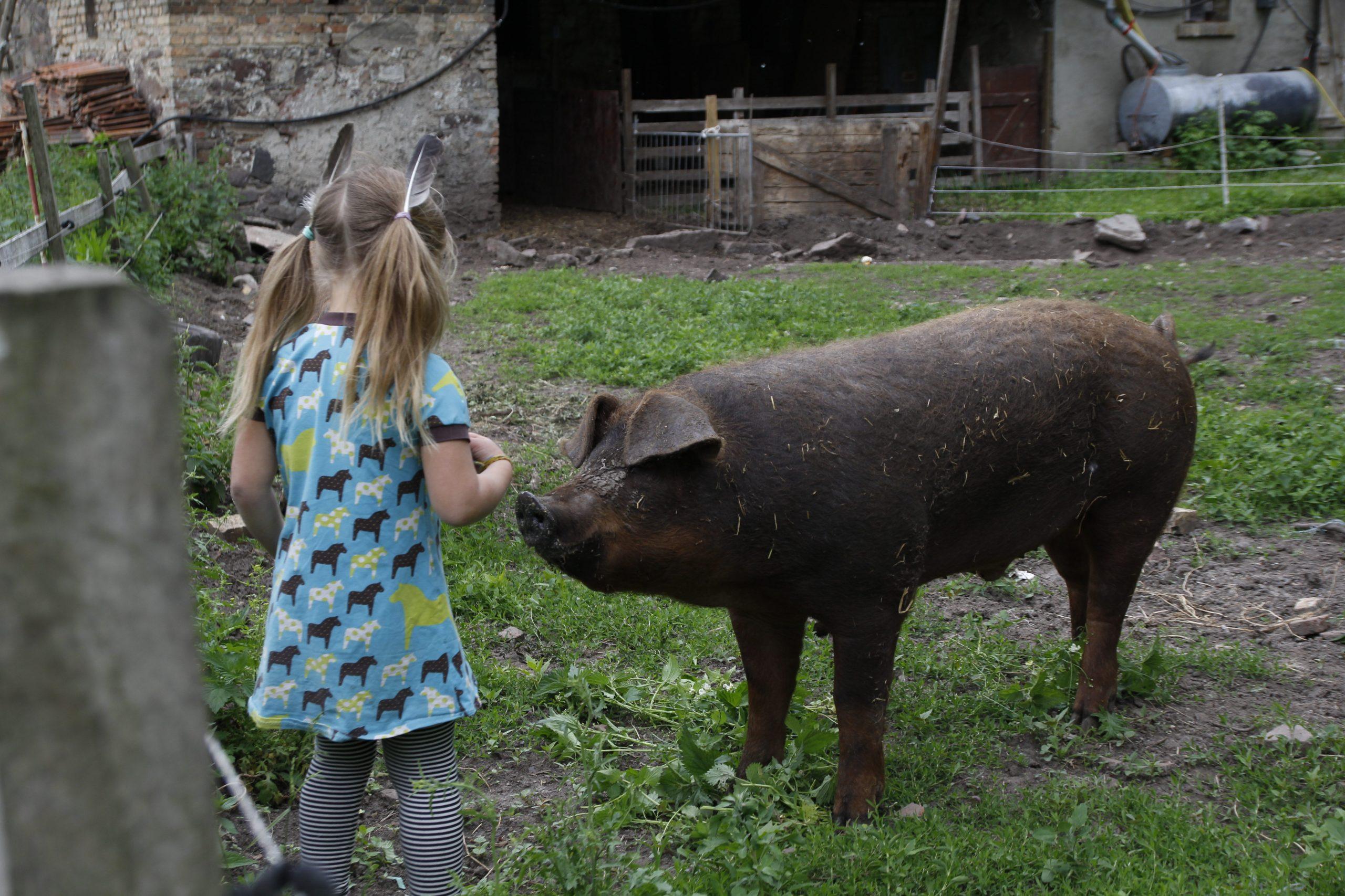 Schwein streicheln
