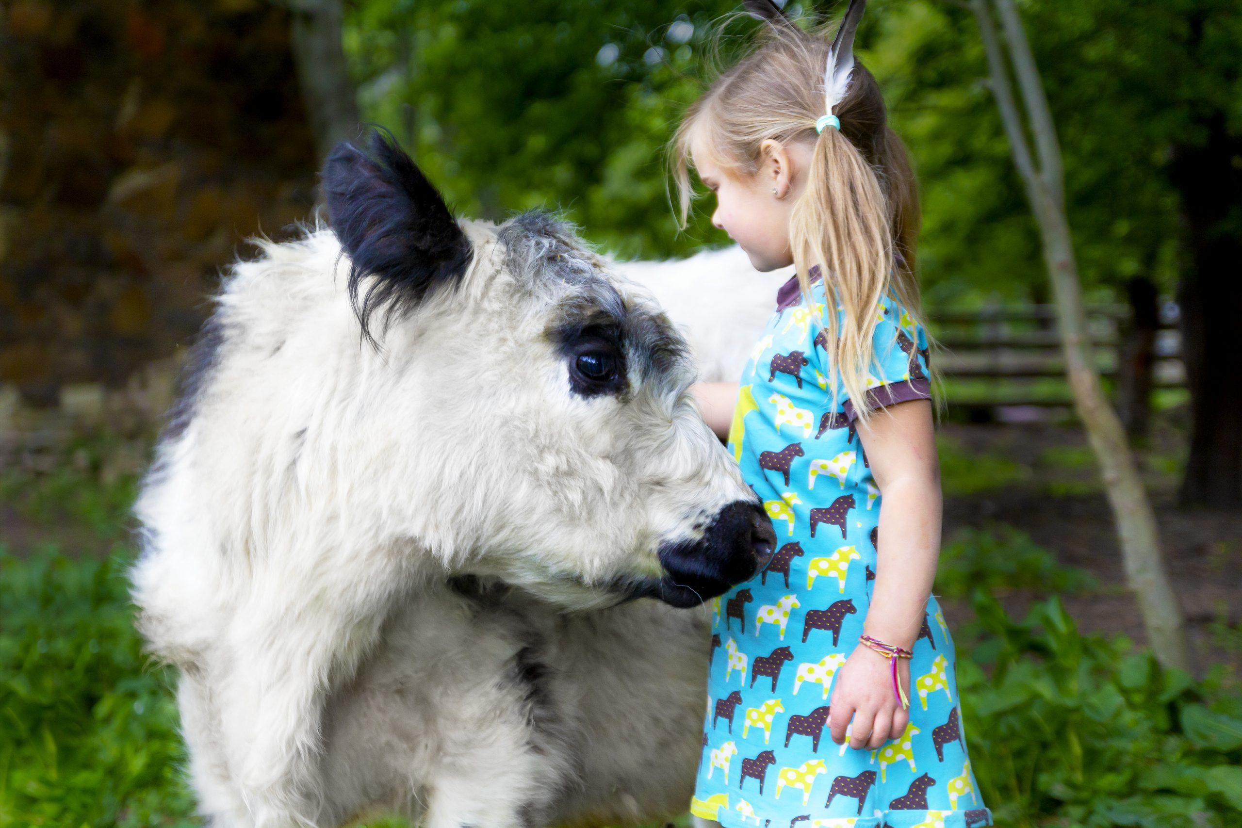 Kühe zum Streicheln, oder kaufen Kind